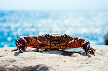 Crab on the beach with ocean in the background