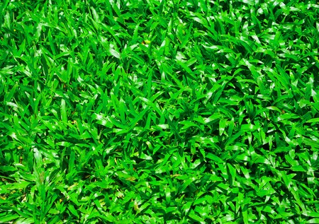 Green grass background Stock Photo - 7900908