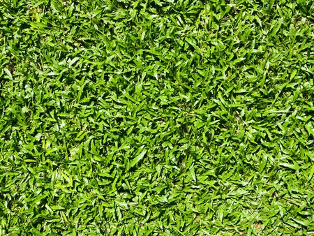 Close up of natural grass texture photo