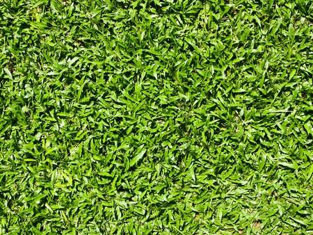 Close up of natural grass texture photo