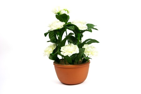 fake Thai jasmine flower with pot isolate over white background photo