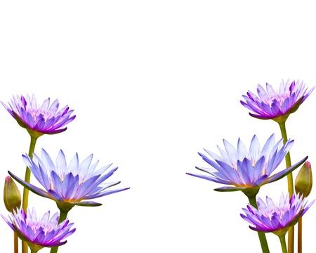 zen flower: Lotus isolate over white background