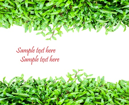 Fresh green grass Stock Photo - 8529806