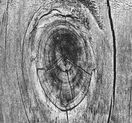Old wood texture Stock Photo - 9228565