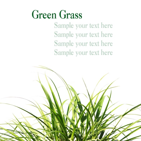 Fresh Spring Green Grass with space for  your text Stock Photo