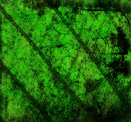 Abstract Green grunge background photo