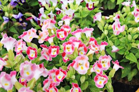Beautiful flowers background Stock Photo - 10609173