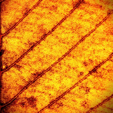 Close up of dry leaf texture for background photo