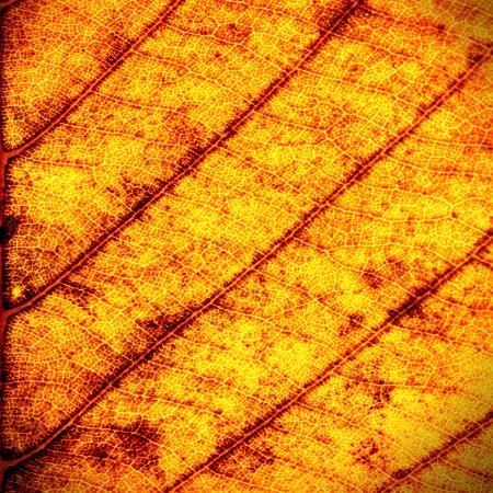 Primer plano de hoja seca textura de fondo