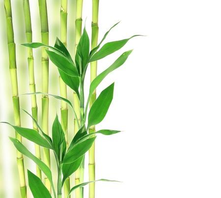 Bamboe met ruimte voor uw tekst