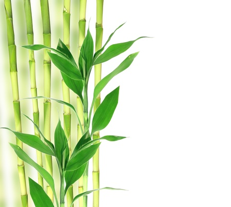 fengshui: Bamboo with space for your text Stock Photo