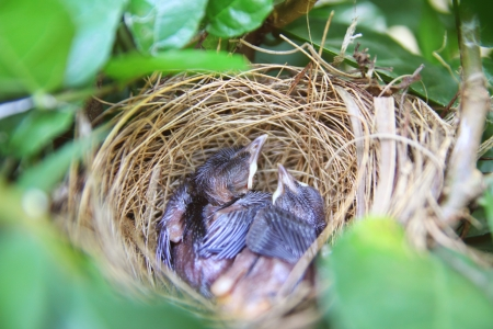 Baby bird sleep in nest Stock Photo - 13661587