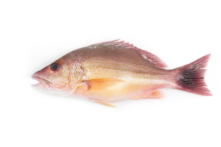 Red Snapper fish on white background Stock Photo