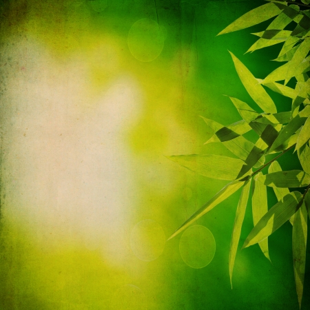 fengshui: Bamboo with old paper grunge texture for background Stock Photo