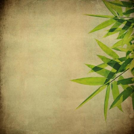 Bamboo leaves on grunge background photo