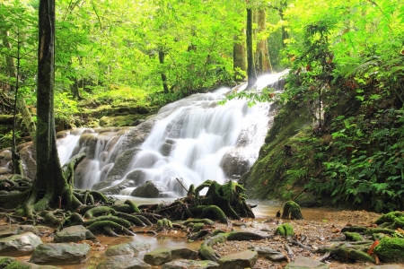 Tropical waterfall in deep forest Stock Photo - 16843091
