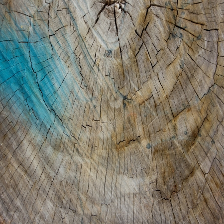 Grunge cut of wood texture for background  photo