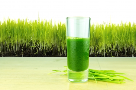 shot glass of wheatgrass with fresh cut wheat grass
