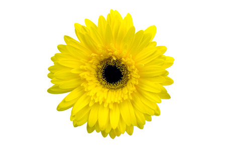 no movement: yellow flower isolated on white backgroundม with clipping path