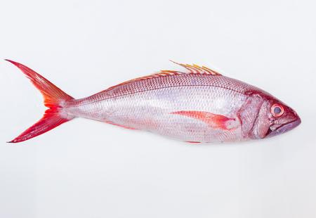 single animal: Whole fresh red fish isolated on white background