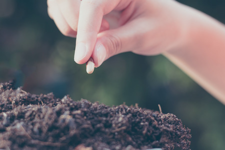 seeding: child hand seeding for planting over green environment background Stock Photo