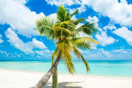 Fallen palm tree on a sandy beach along the turquoise ocean