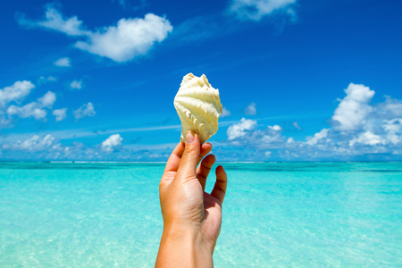 Beautiful tropical shell on womens hand with ocean on background Stock Photo