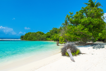 Beautiful sandy beach in uninhabited island in Indian ocean, Maldives Stok Fotoğraf