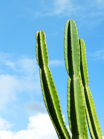 Cactus photo