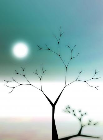 Moonlight shadow photo