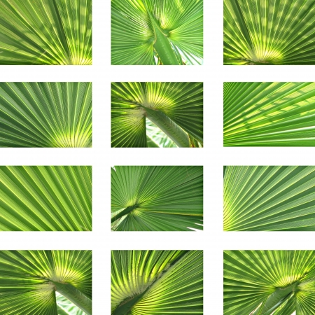 coconut leaf: Plam and coconut texture collection