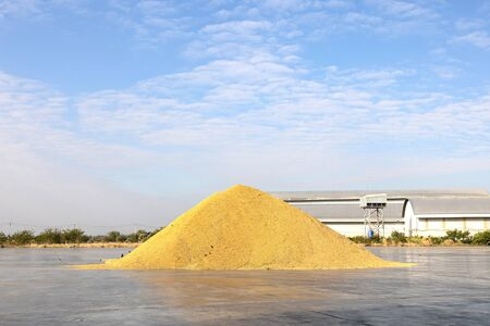 Paddy piles are dried in the sun to expel moisture. Rice mill system. Rice Storage. Banque d'images