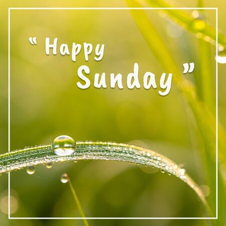 Happy sunday words and dew on the grasson, On green background.