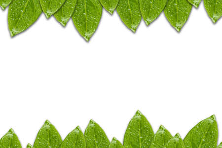 Green leaf frame top and bottom isolate on white background.