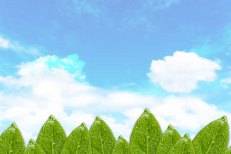 Green leaf isolate on blue sky background. copy space for text.