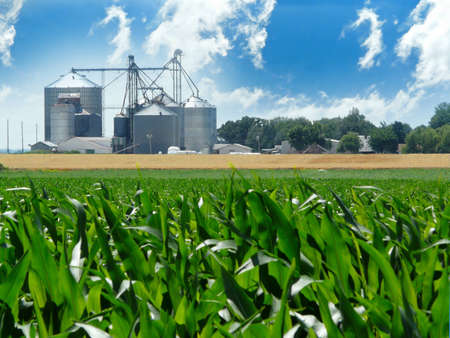 ethanol: Lush, green corn field with grain bins in the distance