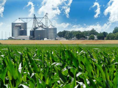 Lush, green corn field with grain bins in the distance