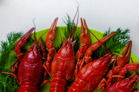 Boiled red crayfish or crawfish with dill herbs on white background. Close up. Crayfish party, restaurant, cafe, pub menu. Copy space