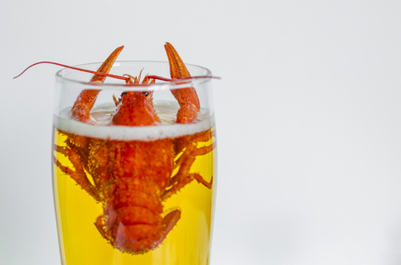 Crayfish or crawfish is sinking in a glass of beer on white background. Copy space Stockfoto