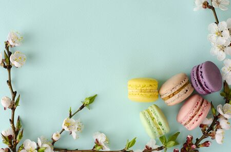 Sweet macarons or macaroons decorated with blooming apricot flowers on pastel blue background. Copy space. Greeting card and spring concept. No diet day, Mothers Day Reklamní fotografie