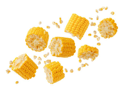 Broken flying sweet corn cob with grains isolated on white. Design element for product label, catalog print. 写真素材