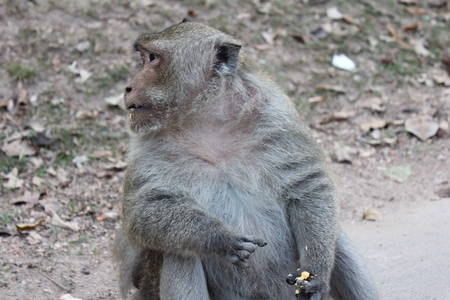 relate:  Long-tailed macaque monkey relate. Stock Photo