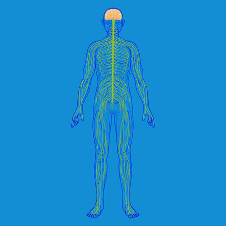 neuralgia: human body silhouette and nervous system