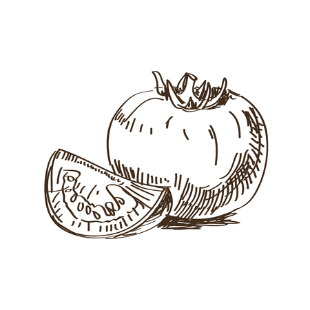 Hand drawn retro tomato sketch. Drawing vector Illustration