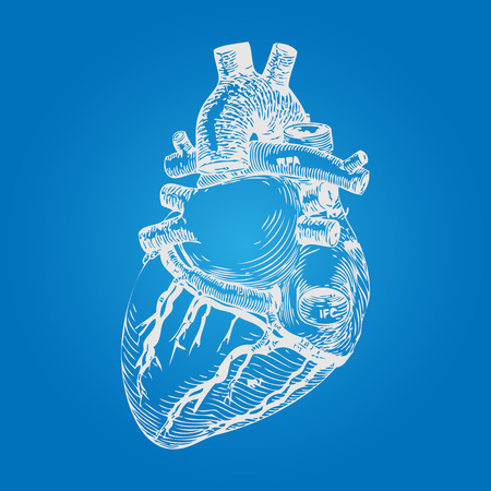 Realistic Human Heart. Vintage style. Hand Drawn style. Vector illustration Illustration