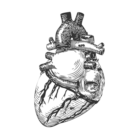 Heart hand drawn sketch. isolated on white background