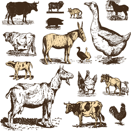 Vintage farm animals drawings set. Vector EPS10 illustration