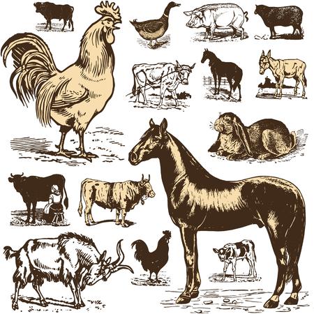 Vintage farm animal set. Vector Çizim