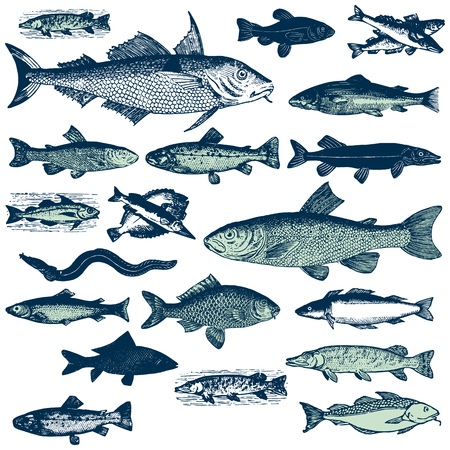 Fish set retro vector EPS10 illustration