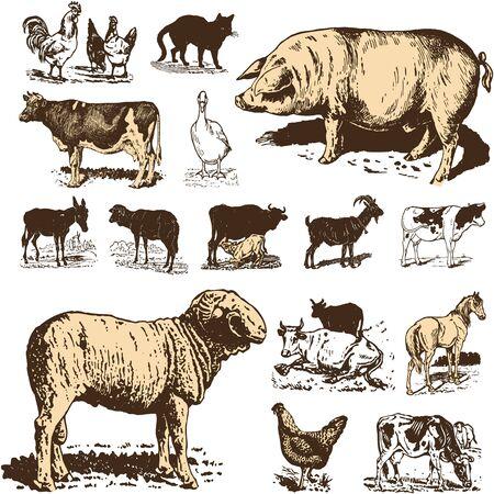 Vintage farm animals drawings set, vector illustration 일러스트